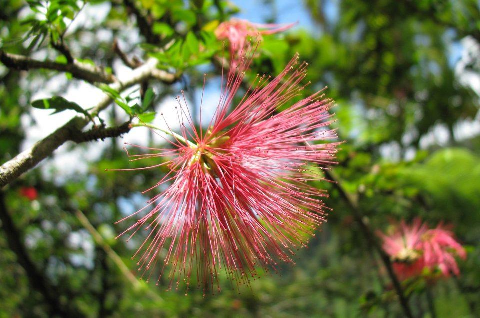 Ogród Botaniczny na Martynice